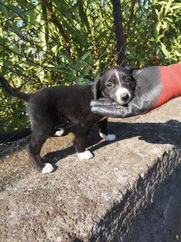 cucciola-salvata-tombino