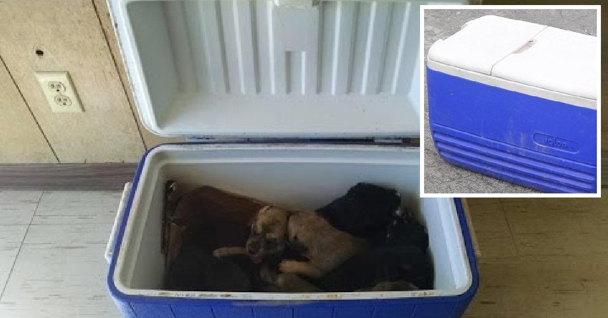 9 cuccioli intrappolati in una scatola e abbandonati in strada