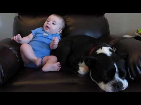 la-reazione-del-cane-quando-il-bimbo-fa-la-puzzetta 2
