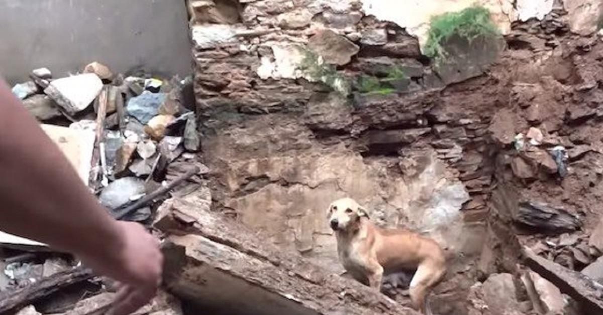 mamma-cane
