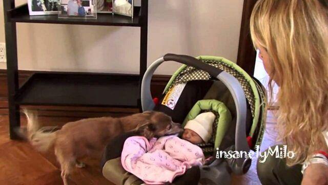 il-primo-incontro-tra-Milo-e-La-neonata