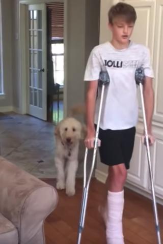 Sawyer-imita-il-suo-fratello-umano-con-la-gamba-rotta
