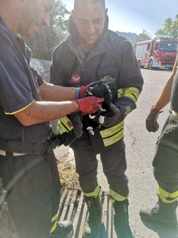pompieri-cagnolina