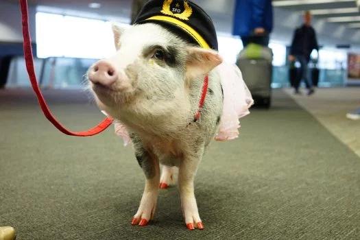 Gli animali più bizzarri trovati in volo