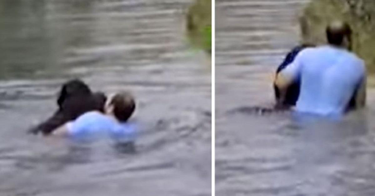 Il personale dello zoo si rifiuta di salvare uno scimpanzé che sta annegando: un uomo si tuffa