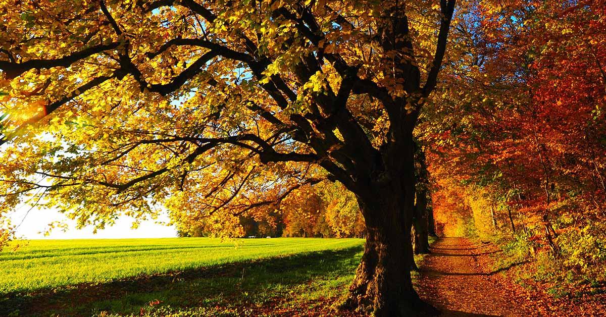 dove vedere il foliage in europa