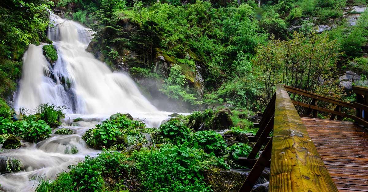 Viaggiare in Germania: La magia della Foresta Nera