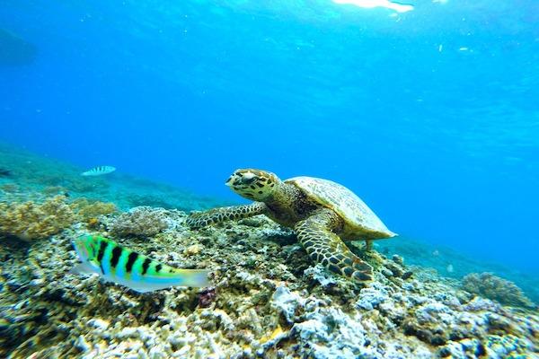 La schiusa delle tartarughe marine