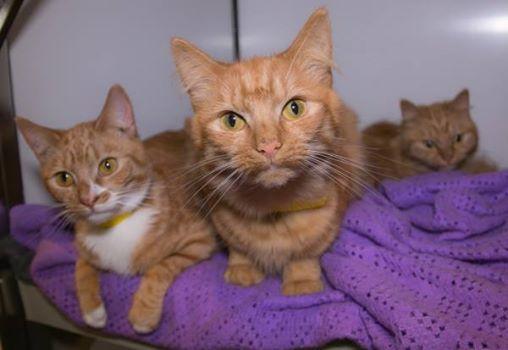 trovati-11-gattini-abbandonati-in-scatole-di-cartone 1
