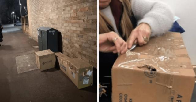 trovati-11-gattini-abbandonati-in-scatole-di-cartone-ora-sono-sani-e-salvi
