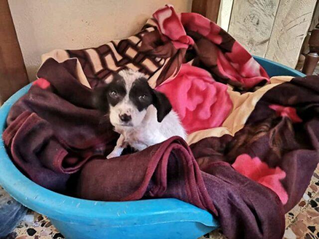 Angel-il-cucciolo-trovato-solo-e-triste-sul-ciglio-della-strada 2