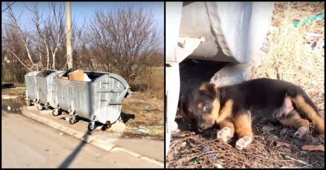 il-salvataggio-del-cucciolo-abbandonato-vicino-ai-secchi-della-spazzatura-che-ha-commosso-tutti-i-volontari
