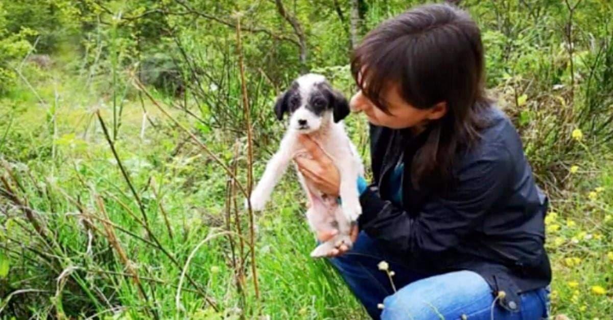 Angel-il-cucciolo-trovato-solo-e-triste-sul-ciglio-della-strada-ha-avuto-la-sua-seconda-possibilità-di-vita