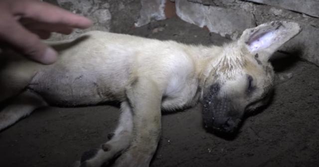 il-salvataggio-del-cucciolo-trovato-privo-di-sensi-e-di-come-è-riuscito-a-trovare-una-nuova-famiglia