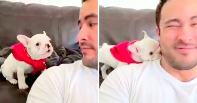 il-cucciolo-di-bulldog-che-si-imbarazza-per-i-complimenti-del-suo-amato-amico-umano