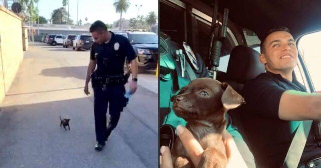 agenti-di-polizia-salvano-la-vita-di-un-cucciolo-abbandonato-ma-alla-fine-prendono-una-decisione-che-cambia-per-sempre-le-loro-vite