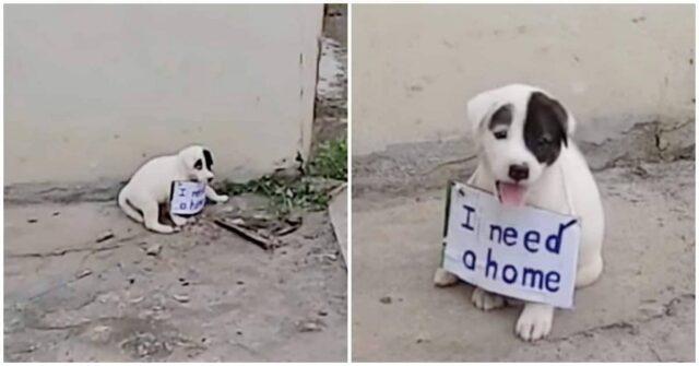 il-cucciolo-abbandonato-con-un-cartello-al-collo