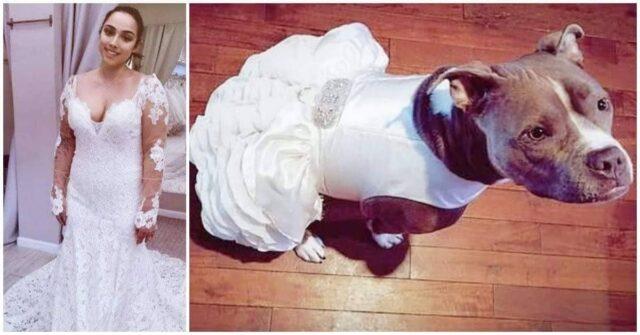 Bailey-partecipa-al-matrimonio-dei-loro-amici-umani-le-immagini-diventano-virali
