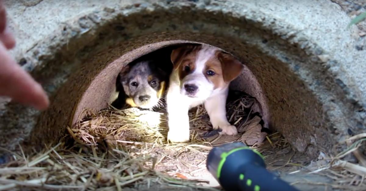 L'uomo-fa-una-promessa-alla-cagnolina-e-salva-i-suoi-3-cuccioli-che-erano-in-grave-difficoltà