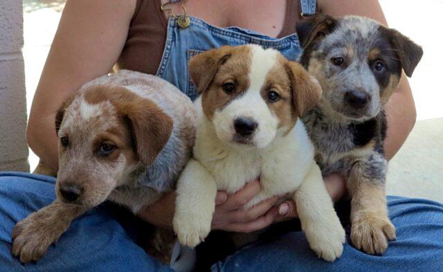 L'uomo-fa-una-promessa-alla-cagnolina-e-salva-i-suoi-3-cuccioli 2