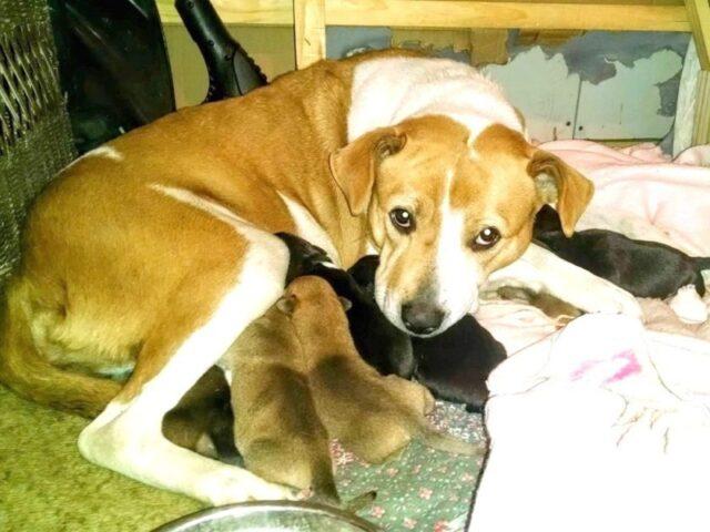 Harley-abbandonata-dalla-sua-famiglia-pochi-giorni-prima-del-parto 1