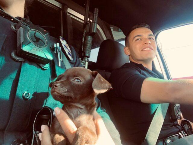 agenti-di-polizia-salvano-la-vita-di-un-cucciolo-abbandonato