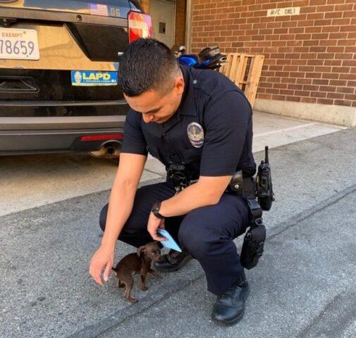 agenti-di-polizia-salvano-la-vita-di-un-cucciolo-abbandonato 1