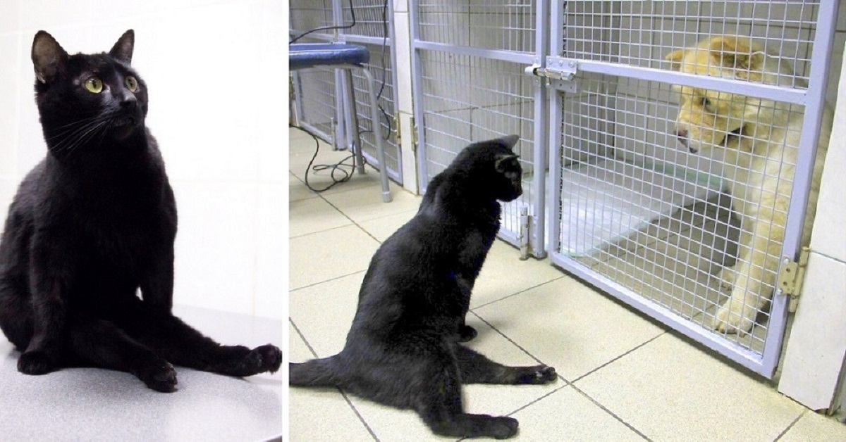La-storia-di-Lucifero-il-gatto-paralizzato-a-causa-di-un-incidente-che-e-riuscito-a-fare-qualcosa-di-speciale