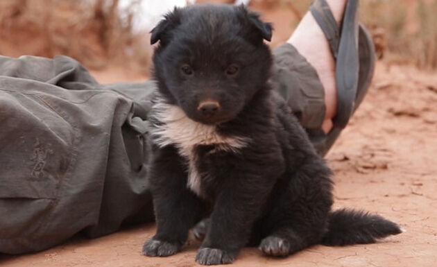 i-due-esploratori-salvano-il-cucciolo-abbandonato 1