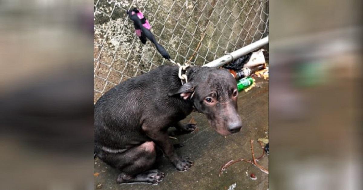 Poliziotto adotta il cane che aveva appena salvato