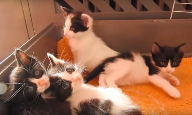 Aragon-salva-la-vita-dei-gattini-abbandonati 1