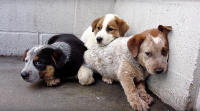 L'uomo-fa-una-promessa-alla-cagnolina-e-salva-i-suoi-3-cuccioli 1