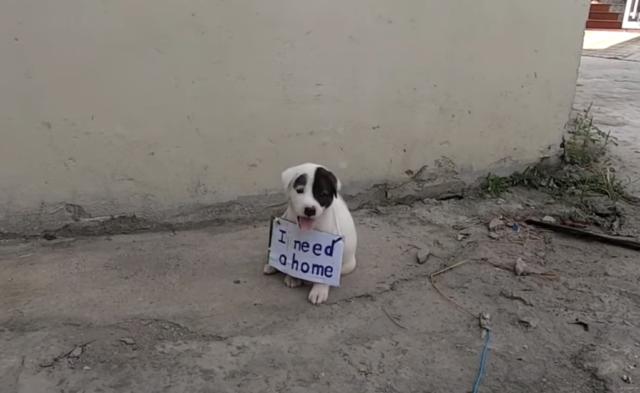 il-salvataggio-del-cucciolo-abbandonato-con-la-nota-intorno-al-collo