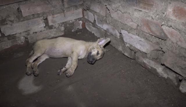 il-salvataggio-del-cucciolo-trovato-privo-di-sensi