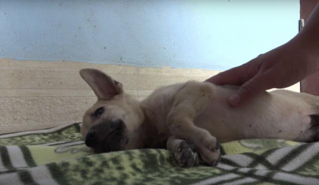 il-salvataggio-del-cucciolo-trovato-privo-di-sensi 1
