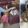 asilo-per-cani
