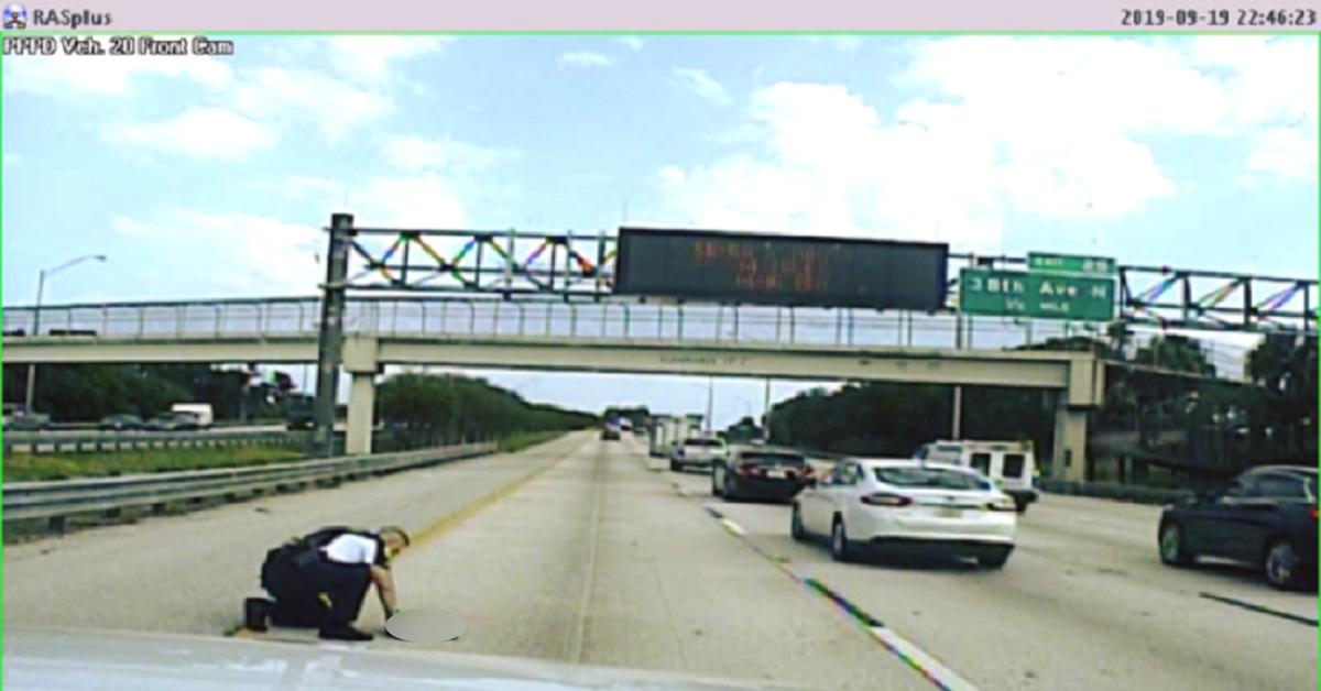 cane-autostrada-polizia