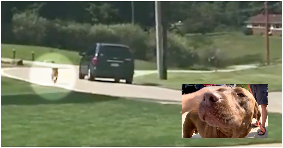 cane-corre-macchina
