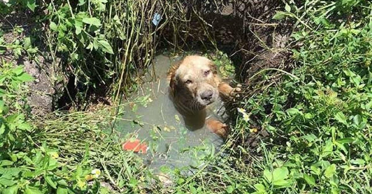 cane-fossa-biologica