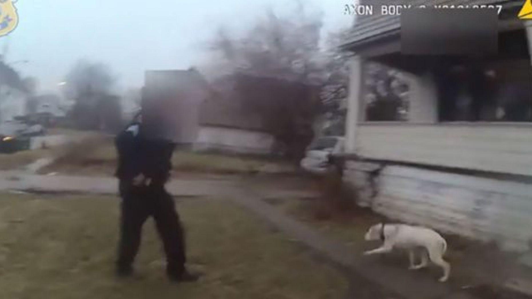 cane-poliziotto