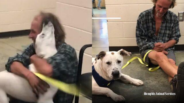 cane-senzatetto
