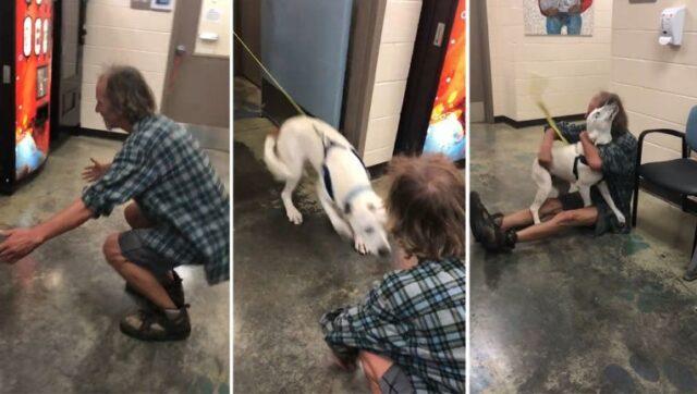 cane-uomo-rifugio