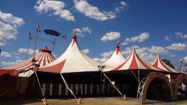 Verso la libertà: un circo senza animali