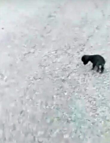 cucciola-nera-cieca
