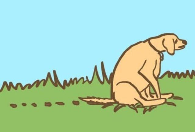 cucciolo-seduto