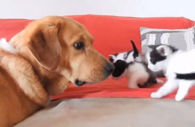 Aragon-salva-la-vita-dei-gattini-abbandonati 2