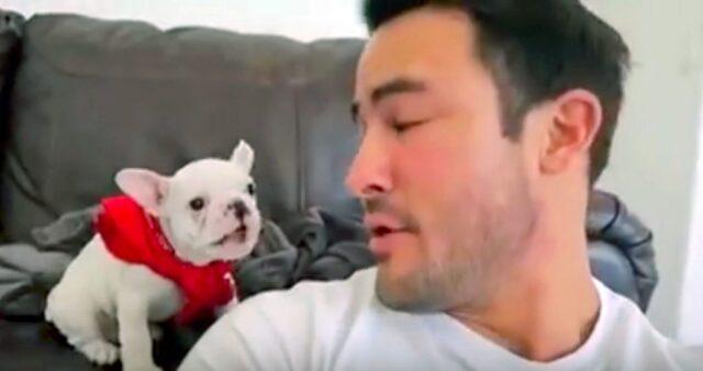 il-cucciolo-di-bulldog-che-si-imbarazza-per-i-complimenti