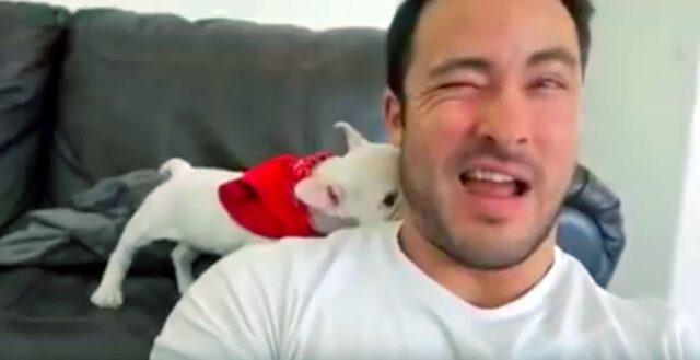il-cucciolo-di-bulldog-che-si-imbarazza-per-i-complimenti 2