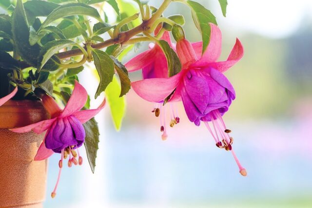 Ecco come fanno i fiori a sapere quando sbocciare