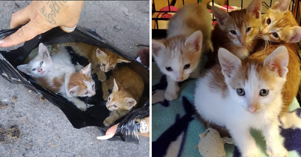 gattini-borsa